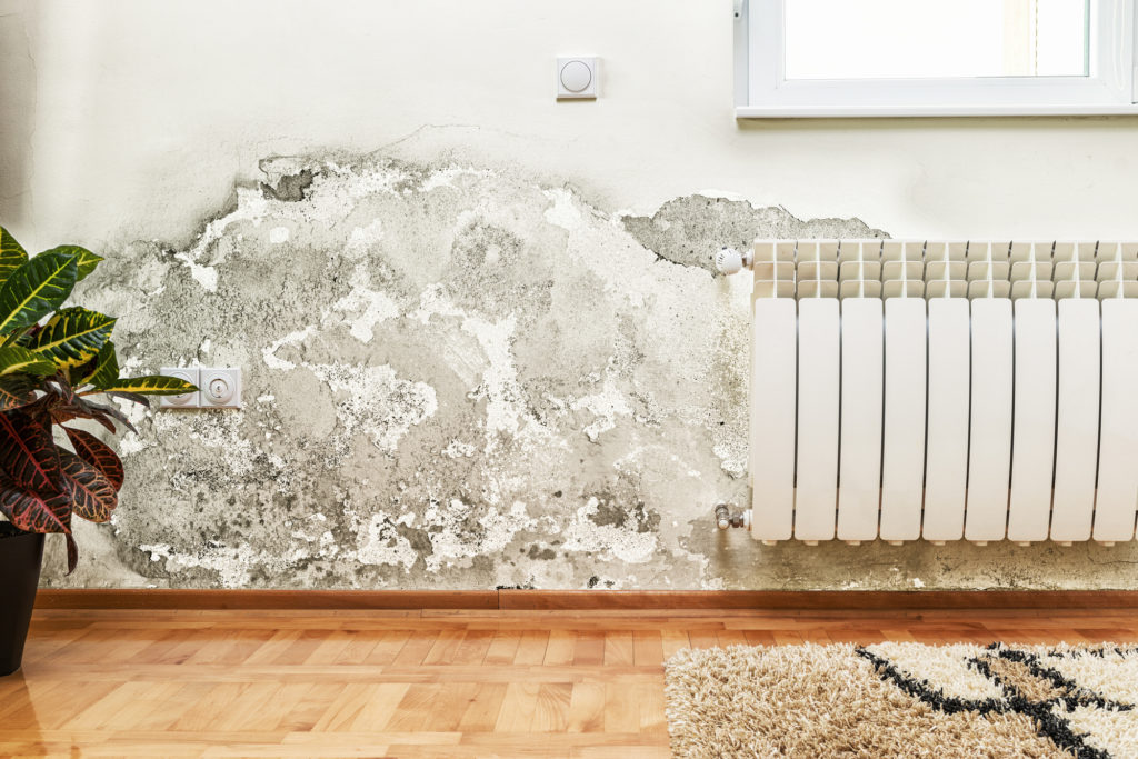 Mold Removal in Hamilton | Inch By Inch Inspections