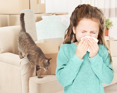 cute girl sneezing cat mold allergies removal toronto