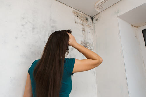 mold wall removal girl distressed