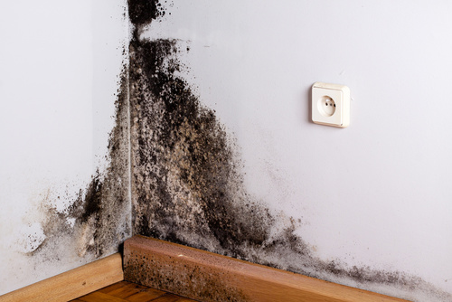 mold inspection toronto black mold wall corner